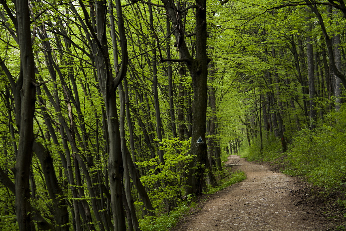 Hiking and cycling path in Brasov, Romania