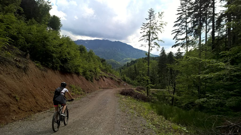 Cycling tour in Brasov - cycling on a forest road near Brasov