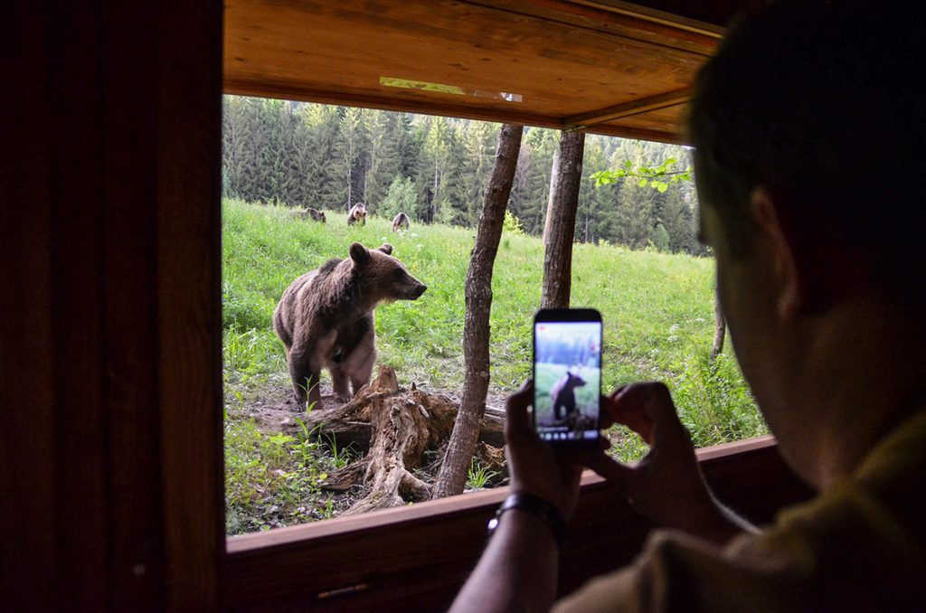 Inside a bear hide in one of our bear watching tours in Romania