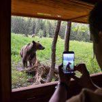 Bear watching tour in Romania