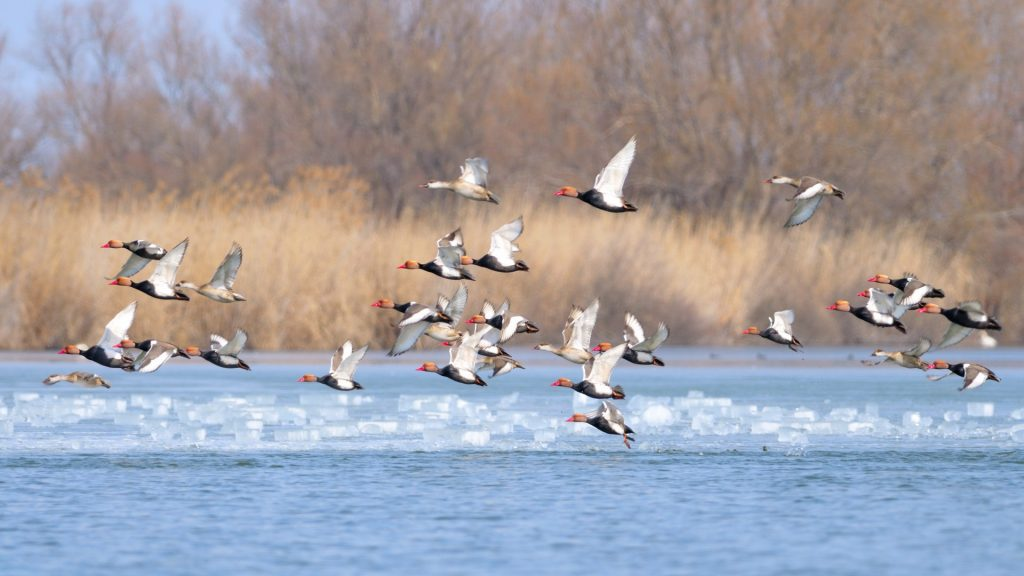 Bird watching tours in Romania