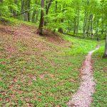 Single trail tours in Romania