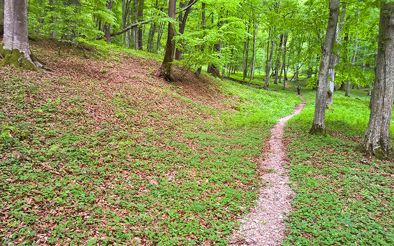 Cycling tours in Transylvania - single trail