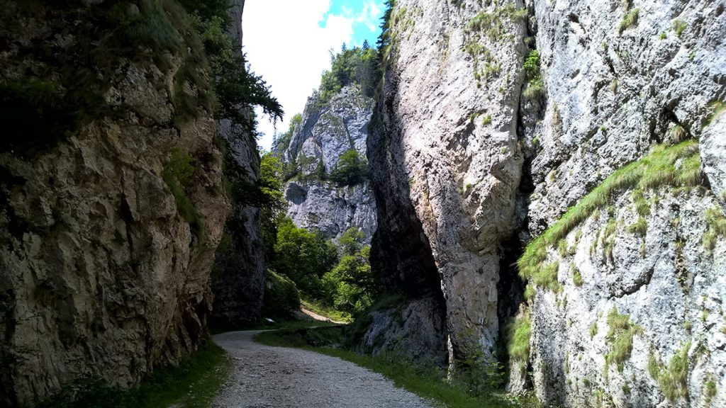 Gorges de Zarnesti