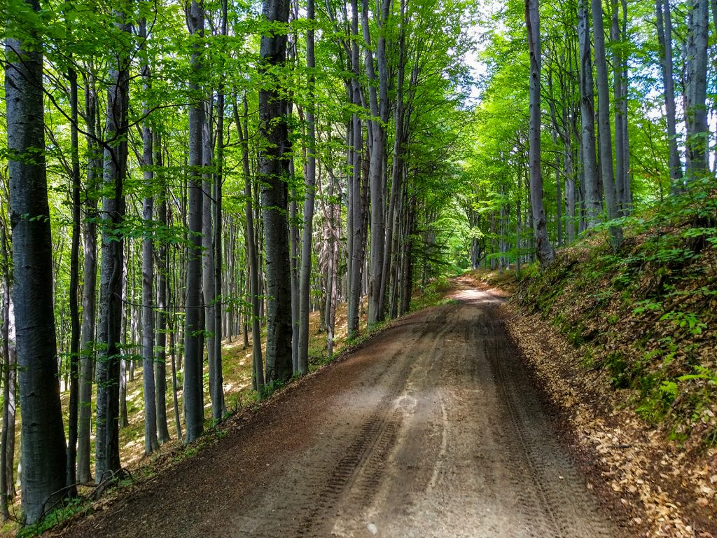 Forest road in Holbav
