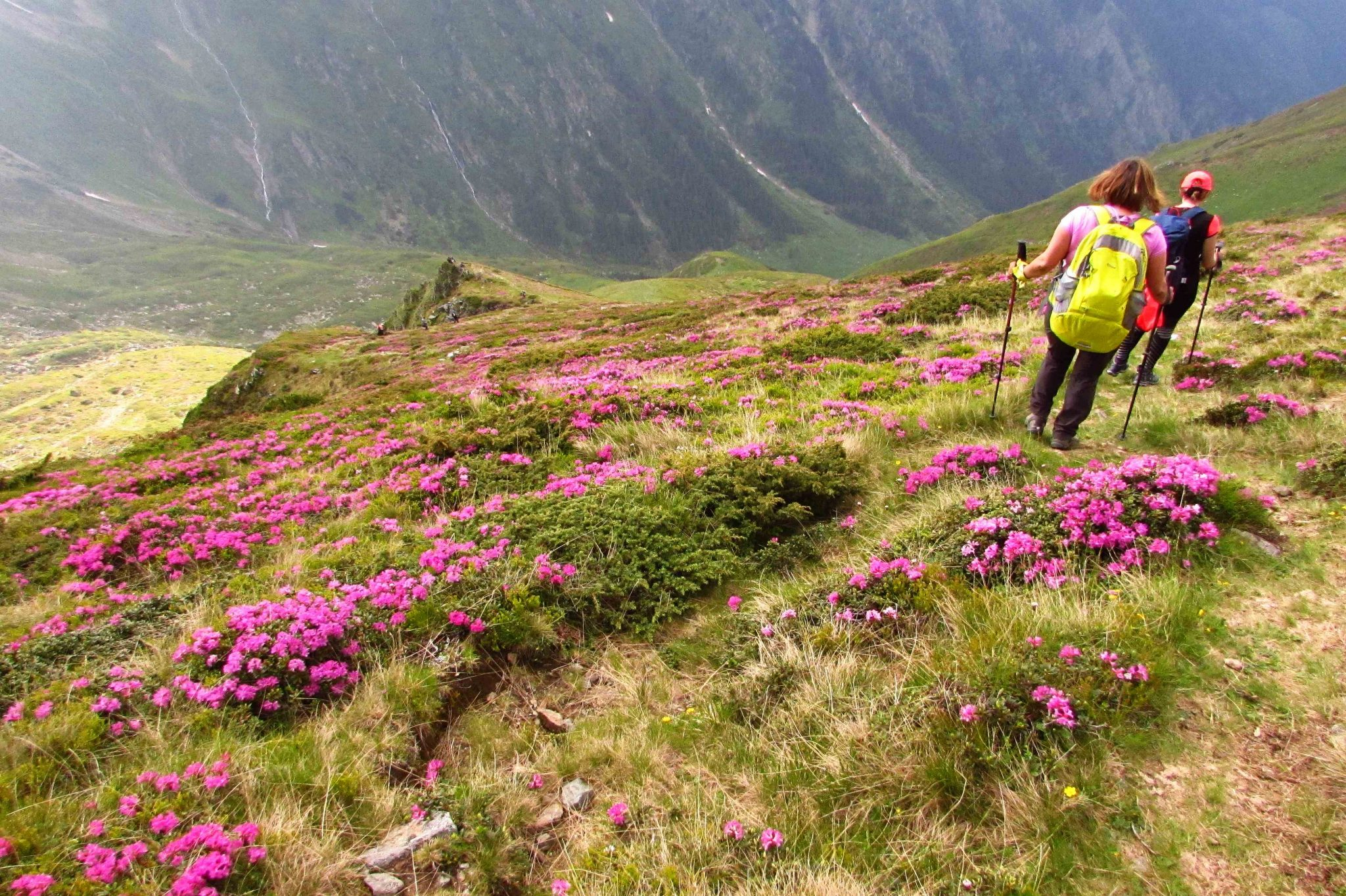 Hiking in Fagaras Mountains