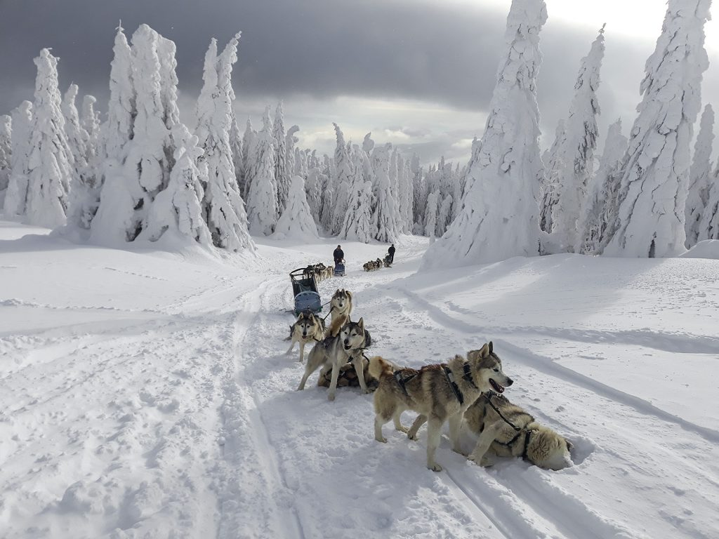 Winter tours in Romania - Dog sledding trip in Harghita