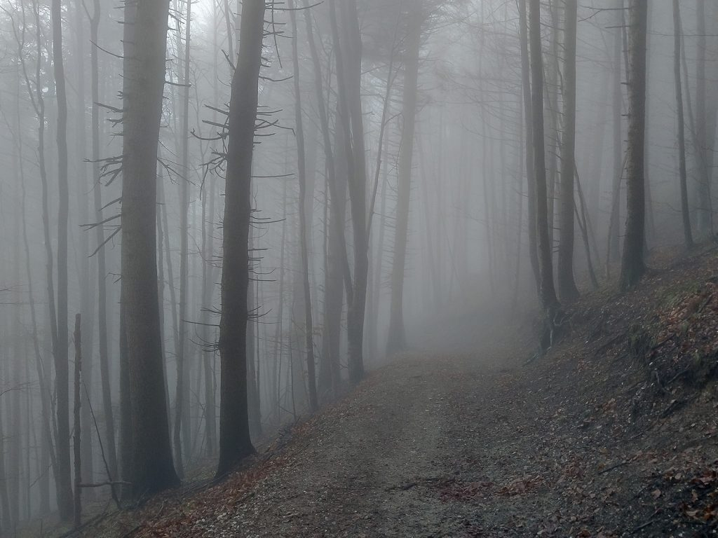Fog on the trail
