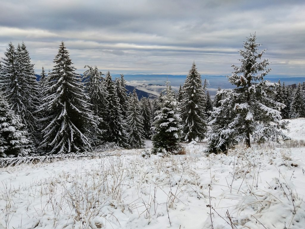 Winter landscape in Piatra Mare mountains