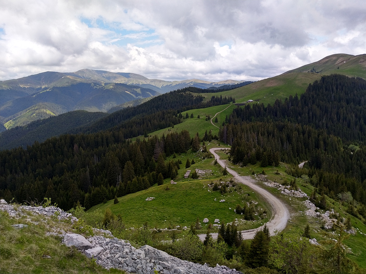 Forest road in Bucegi mountains